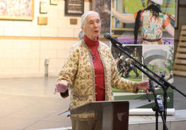 Jane Goodall delivering the lecture